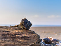 Shell auf einem Stück Holz lizenzfreie stockfotografie