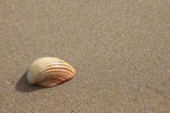 Shell auf einem Strand lizenzfreies stockfoto