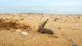 Shell auf einem Strand Stockfoto