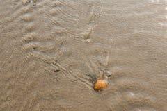 Shell auf einem Strand Stockfotografie