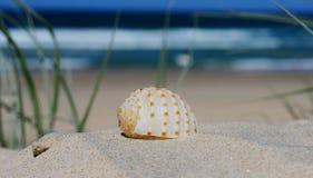 Shell auf einer Sanddüne Stockfotos
