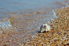 Shell auf Kieseln in der Welle Stockfotografie