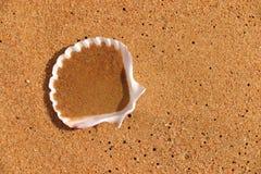 Shell auf orange beachsand Lizenzfreie Stockbilder