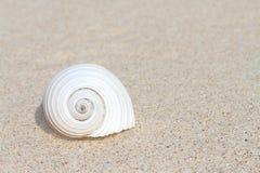 Shell auf Sand Lizenzfreie Stockbilder