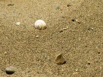 Shell auf sandigem Strand lizenzfreies stockfoto