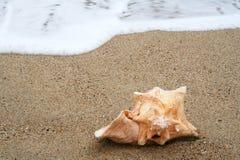Shell auf Strand Stockbilder