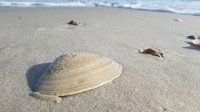 Shell av stranden Arkivfoto