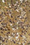 Shell avec la roche que la plage donnent une consistance rugueuse. Photos libres de droits