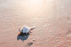 Shell avec le matin exposent au soleil photographie stock libre de droits