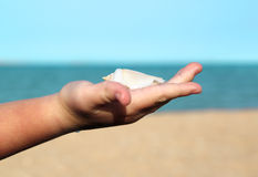 Shell in baby palm on sea background Royalty Free Stock Image