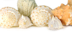 Shell background. With copy space for your text stock photography