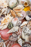 Shell background 3 Royalty Free Stock Photo