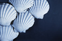 Free Shell Background Stock Photos - 31250893