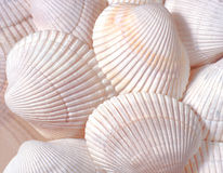 SHELL BACKGROUND Stock Photos