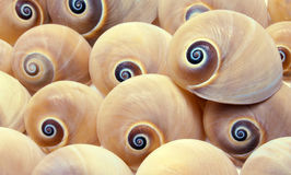 Shell Background Stock Images