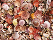 Shell Background Royalty Free Stock Photography