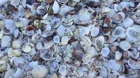 Shell Background stock footage