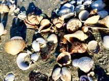 Shell Background foto de stock royalty free