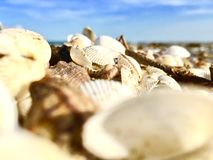 Shell background Stock Photography