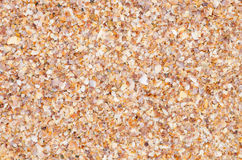 Shell background on a sand beach Royalty Free Stock Photo