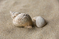 Shell bakgrund Arkivbild