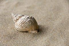 Shell bakgrund Royaltyfri Bild
