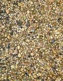 Shell bakgrund Royaltyfria Bilder