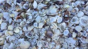 Shell bakgrund arkivfilmer