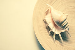 Shell on bamboo plate Stock Photo