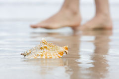Shell and bare feet on beach Royalty Free Stock Image