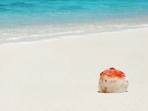Shell on the beach. Shell on the beautiful tropical beach Stock Image