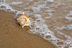 Shell on the beach. Detail of shell on the beach Stock Photography