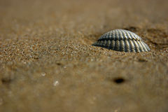 Shell on the beach. A lonely shell on the beach Royalty Free Stock Images