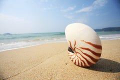 Shell on beach Royalty Free Stock Photos