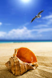 Shell on the beach. Travel background Royalty Free Stock Photography