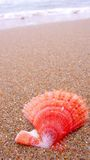 Shell on beach. Colorful scallop Shell on Beach Royalty Free Stock Image