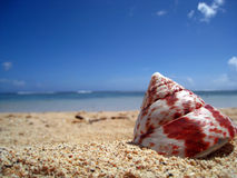Shell on the beach. A seashell on the beach in the south pacific island of Rarotonga, in the Cook Islands Royalty Free Stock Photos