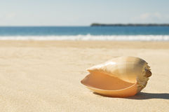 Shell on the beach Royalty Free Stock Photos