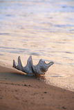 Shell on the beach stock photo
