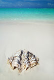 Shell on the beach Stock Photography