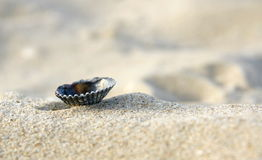 Shell on the beach. Laying in the white sand Royalty Free Stock Photos