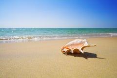 Shell on the beach. Nice sea shell on the sandy beach Stock Photo