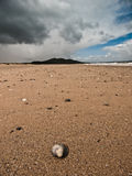Shell on the beach. A shell in the foreground on a marvellous beach. Shot in Ireland Royalty Free Stock Photo
