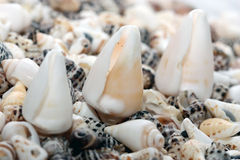 Shell on beach. Vacation memories from beach, seashell and starfish Royalty Free Stock Photos