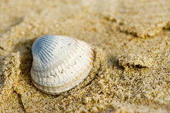 Shell at the beach Royalty Free Stock Photography
