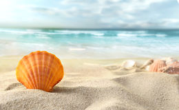 Shell on the beach Stock Images