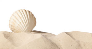 Shell on beach. Isolated on a white background,with a lot of copy-space Royalty Free Stock Photography