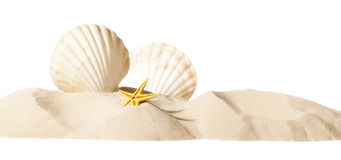 Shell on beach. Isolated on a white background, personal editing Royalty Free Stock Images