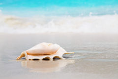 Shell on beach Stock Photo