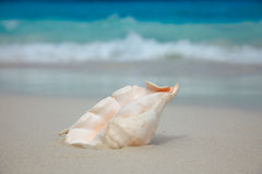 Shell on the beach. Stock Photography
